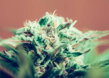 The latest #chemjobs frontier: medical marijuana testing?